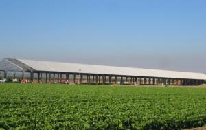 Conergy construirá una central de energía solar fotovoltaica