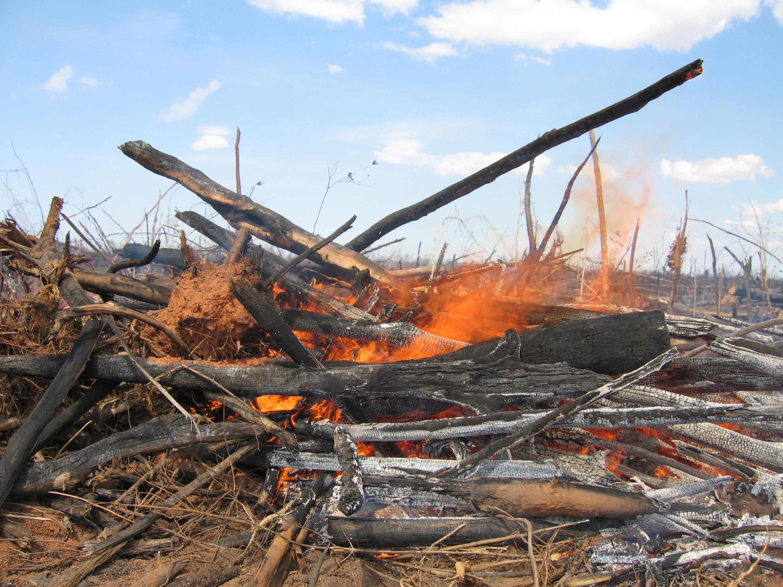 REDD+: Para frenar el cambio climático por la deforestión
