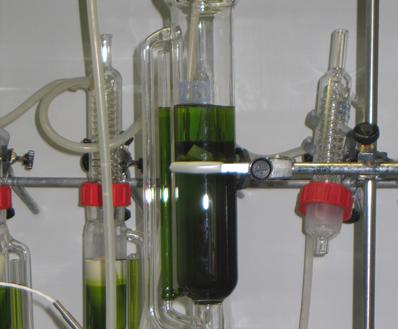 ENERGREEN: mejorar la eficiencia en el cultivo de microalgas