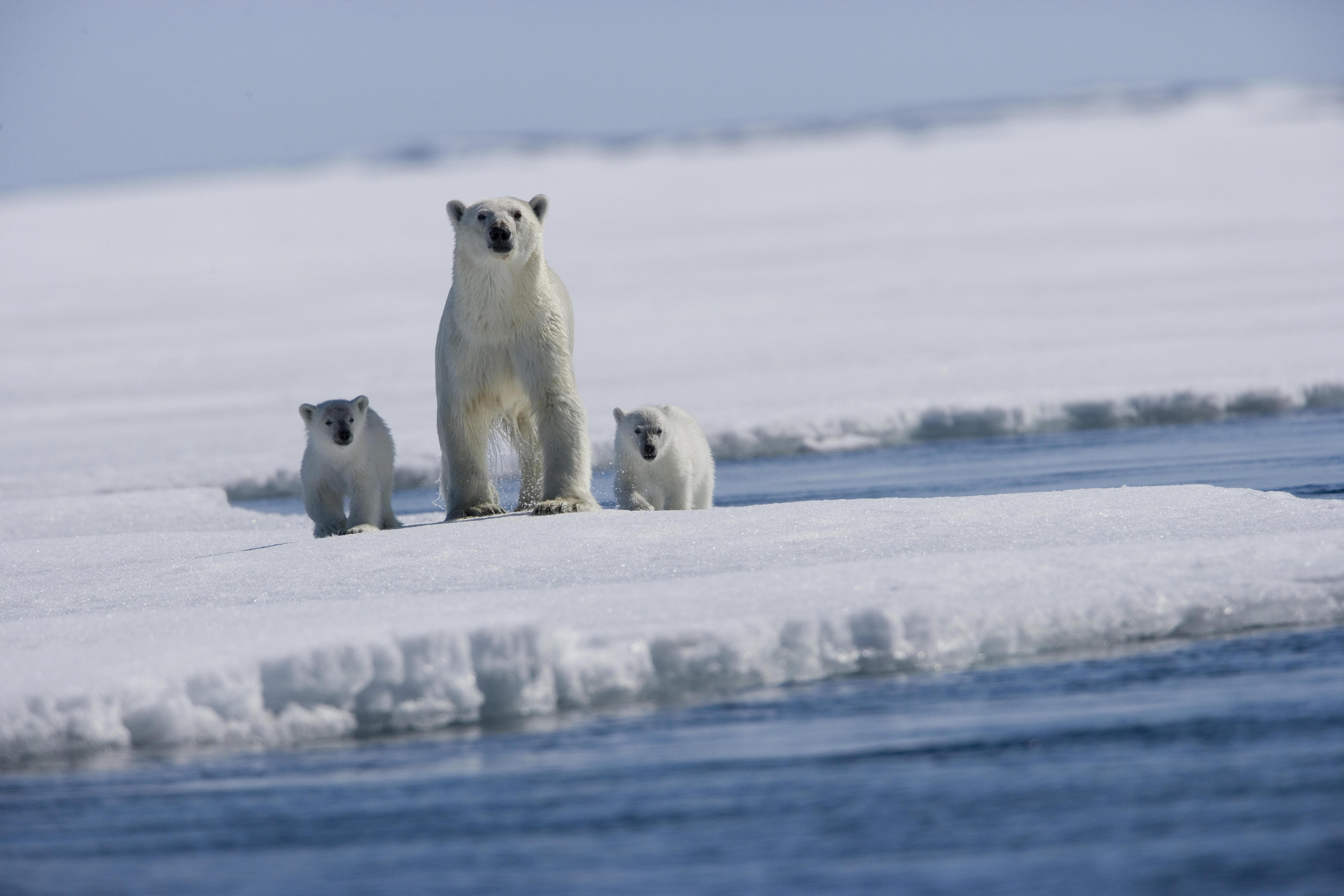 Nuevo record de mínimo de hielo ártico