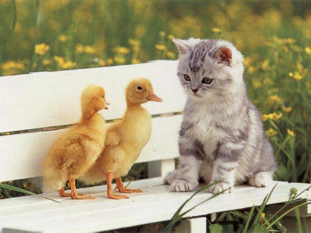 Los gatos amenezan las aves, no la eólica