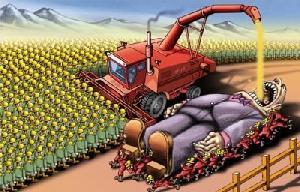 Energías renovables: Los biocombustibles compiten con los alimentos y emiten CO2