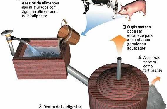 Biogás para generar electricidad con residuos de vacas y cerdos en Chile