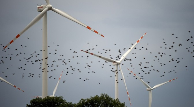 Eólica y aves: E.ON suprime la mortalidad de aerogeneradores en los parques eólicos