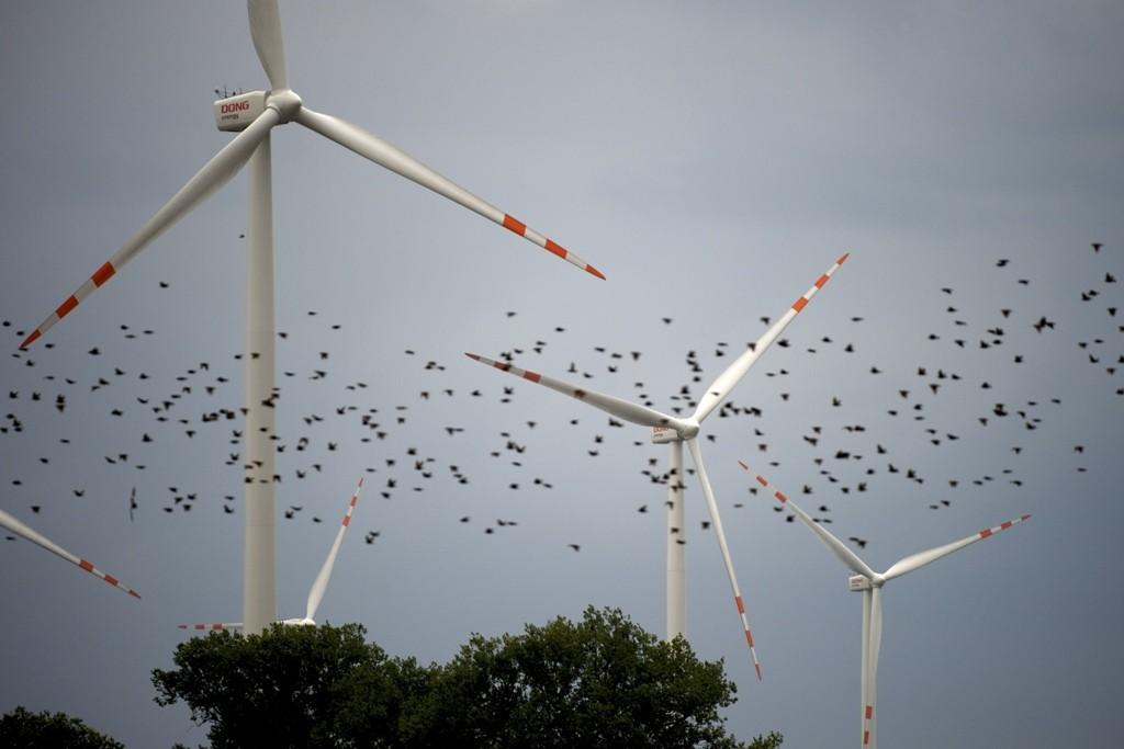 Eólica y aves: E.ON suprime la mortalidad de aerogeneradores en los parques eólicos.