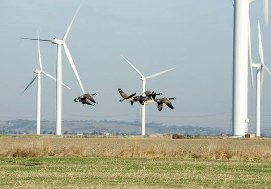 Aves y eólica: E.ON elimina mortalidad en parque eólico