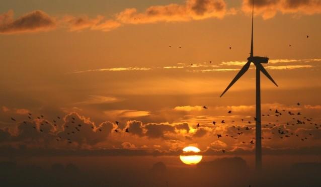 Aves migratorias y energía eólica