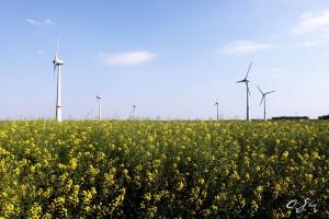 Eólica en Bélgica: potencia de parques eólicos se duplicará en cinco años