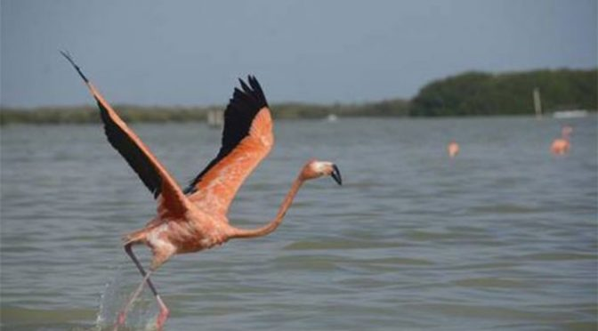 La península de Yucatán, la más afectada por el cambio climático