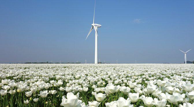 Prevén crecimiento significativo de la energía eólica en Holanda