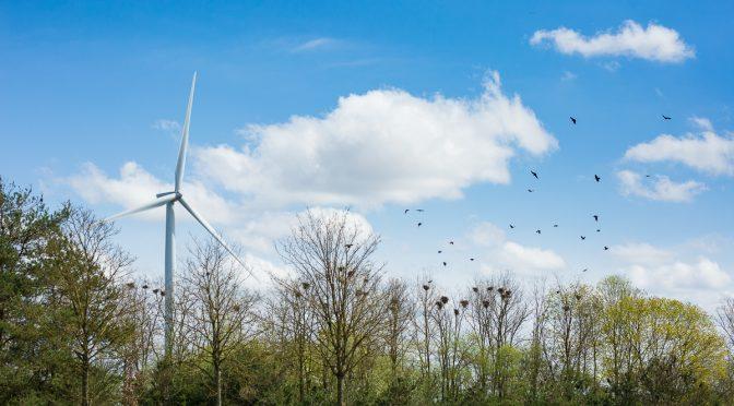 La estrategia de biodiversidad de la UE va de la mano con la transición energética con eólica, termosolar y fotovoltaica