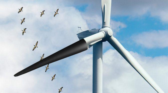La pintura negra de los aerogeneradores ayuda a prevenir la muerte de aves en la eólica