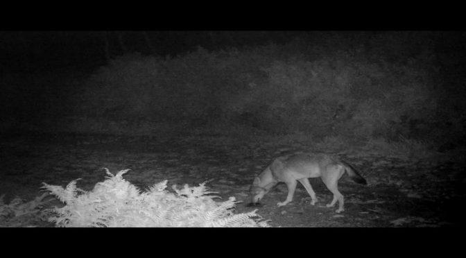 Un estudio de Endesa acredita la compatibilidad de los mamíferos salvajes con los parques eólicos