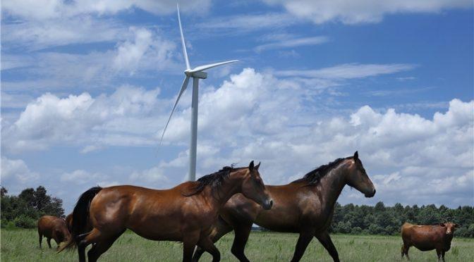 Los PPA convivirán con las subastas de renovables