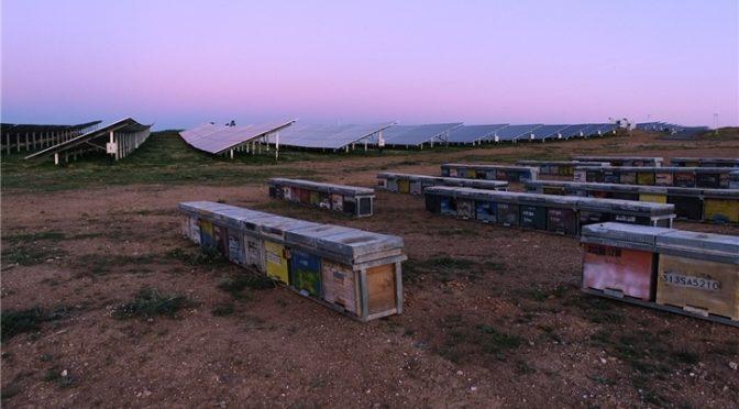 Iberdrola instala colmenas en proyectos fotovoltaicos para preservar la biodiversidad y fomentar la economía circular