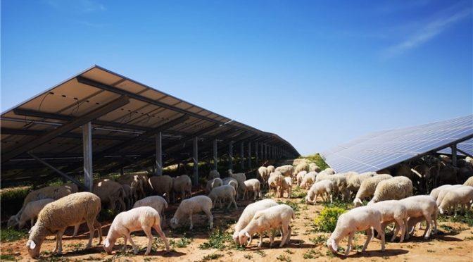 Iberdrola pone en marcha su primera planta fotovoltaica en Teruel