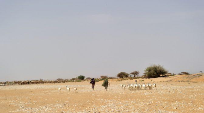 Somalia es un entorno prometedor para la energía eólica
